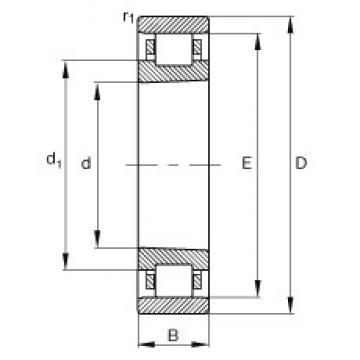 180 mm x 250 mm x 33 mm  FAG N1936-K-M1-SP roulements à rouleaux cylindriques