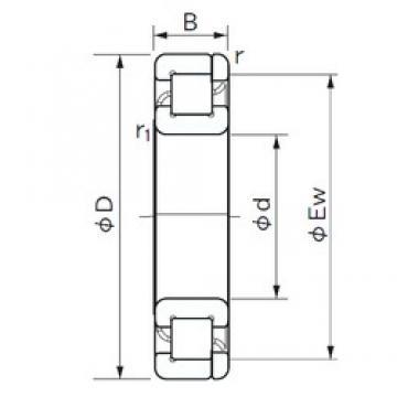 30 mm x 62 mm x 16 mm  NACHI NP 206 roulements à rouleaux cylindriques